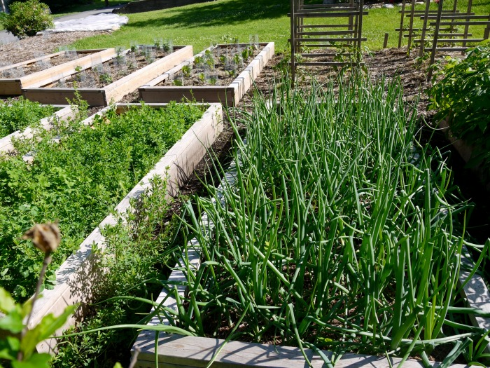 raised beds help with organic weed control