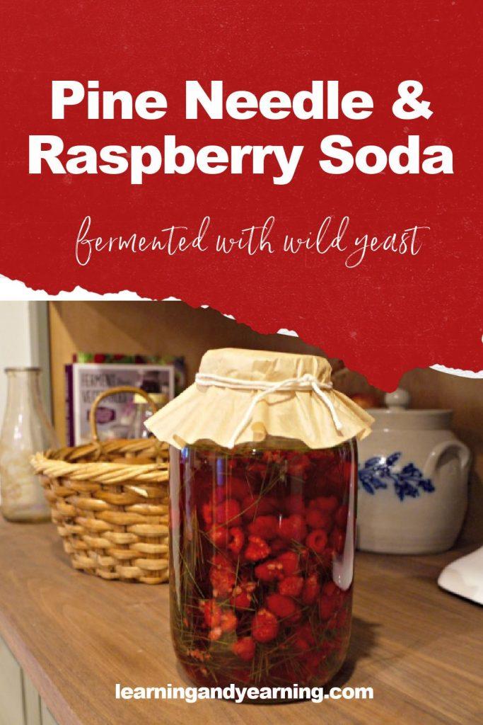 Fermented pine needle and raspberry soda!