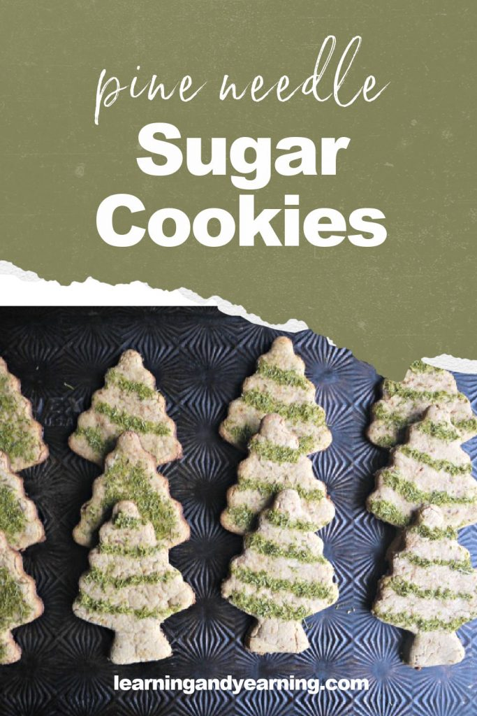 Pine needle sugar cookies!