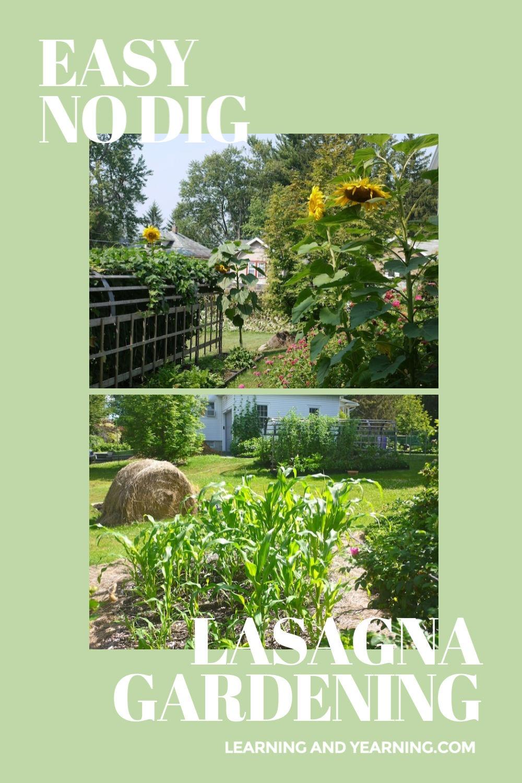 Easy, no-dig lasagna gardening