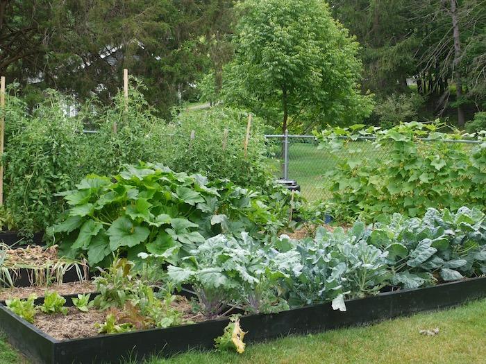 a healtlhy lasagna garden