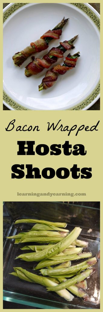 Yes, hosta is edible, and a delicious way to enjoy them is bacon wrapped hosta shoots. They're in your yard, go harvest them now!