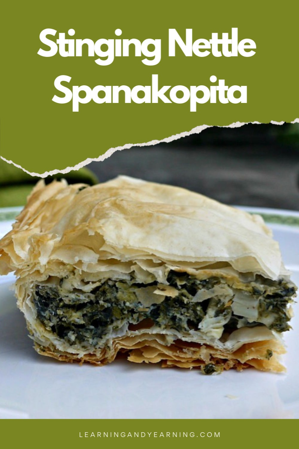 Foraged stinging nettle spanakopita recipe!