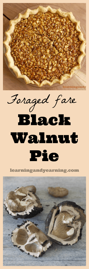 "You don't have to grow black walnuts to enjoy black walnut pie. In many parts of the U.S., they can be foraged for free. This ""real food"" recipe uses no refined sugar and is so delicious."