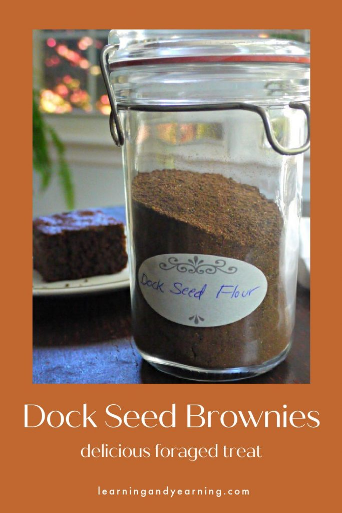 Homemade, delicious dock seed brownies!