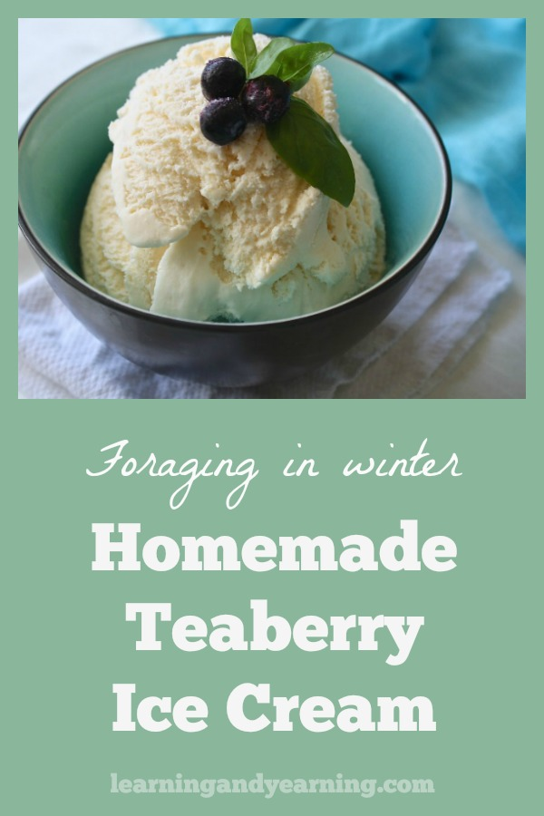 Have you ever tasted real, homemade teaberry ice cream? Store-bought just can't compare, if you can even find it. Making your own is the only way to get the best. #icecreamrecipe #homemade #teaberry #wintergreen