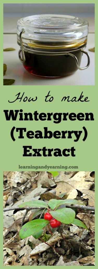 A beautiful plant with an amazing aroma, wintergreen (teaberry) can be harvested year round. Use it to make wintergreen extract which can be used to flavor cookies, ice cream and more.