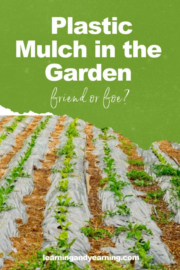 Is using plastic mulch in the garden a good idea?