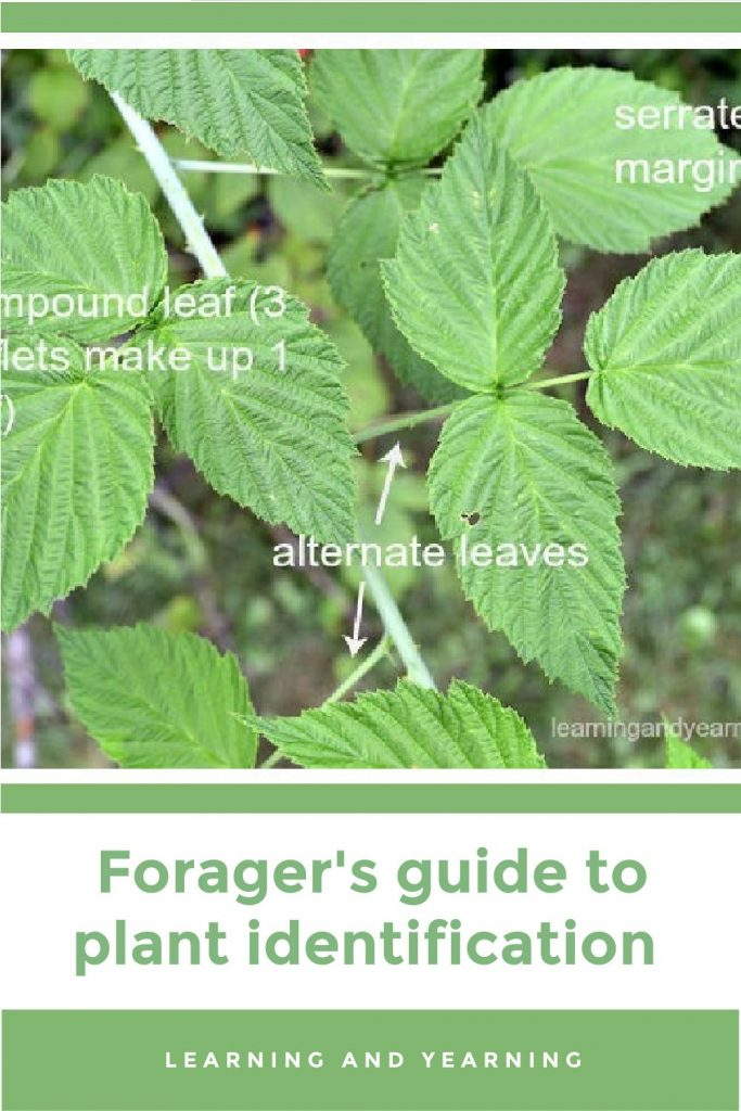 The forager's guide to plant identification!