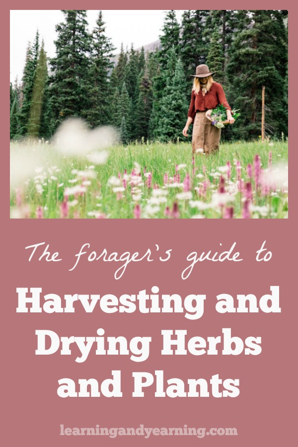 When drying herbs and plants you want to be careful to maintain their aroma, color, and flavor. Learn the common methods used to dry herbs and plants, and tips for harvesting them. You'll learn to dehydrate herbs, fruits, bark, roots, and seeds for winter storage.