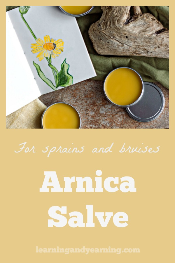 Arnica salve is particularly good at relieving the pain associated with sore muscles, sprains, strains and bruises. It has powerful anti-inflammatory properties that rival over-the-counter painkillers, all wrapped up in one pretty flower. #arnica #herbalism