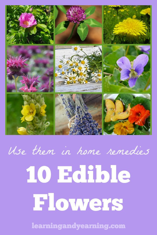 While not all flowers are edible, there are dozens which are. My focus here, though, is on edible flowers that are also amazing when used to make homemade herbal remedies. #edibleflowers #homeremedies #natural #herbalism