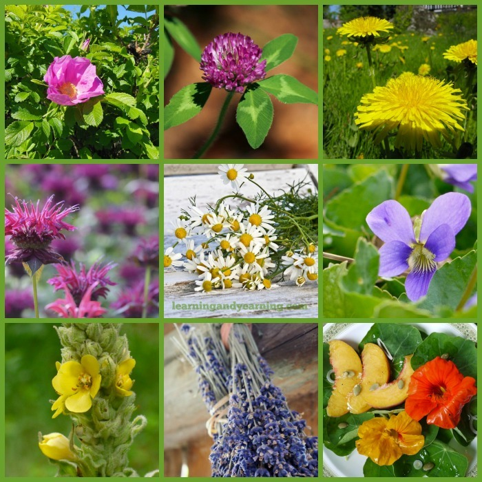 10 edible flowers also used for home remedies