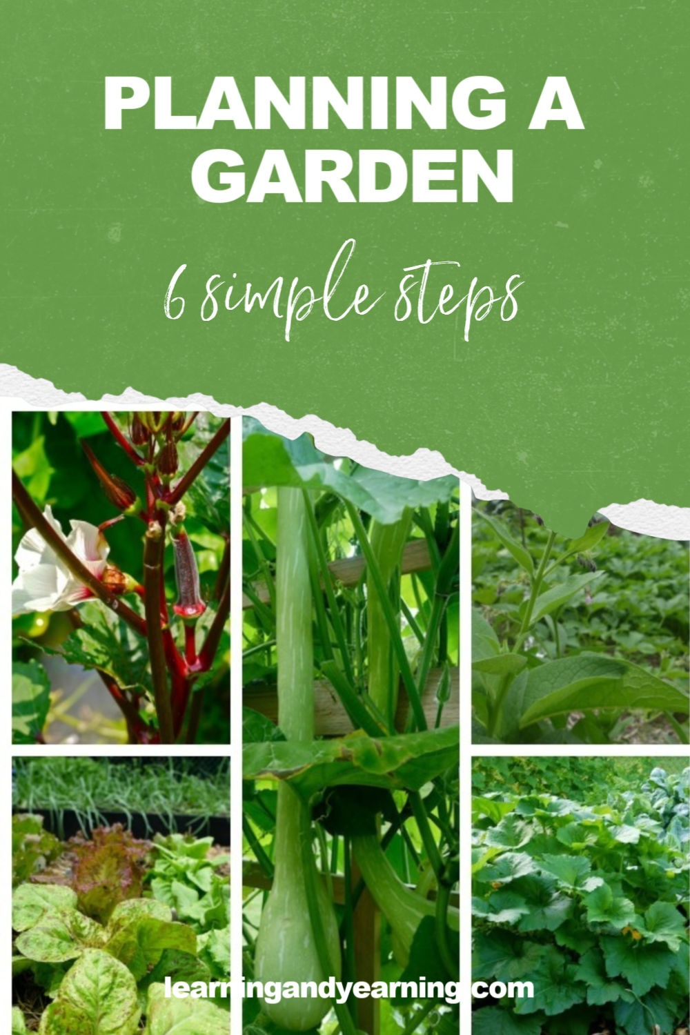 6 simple steps to planning a vegetable garden!