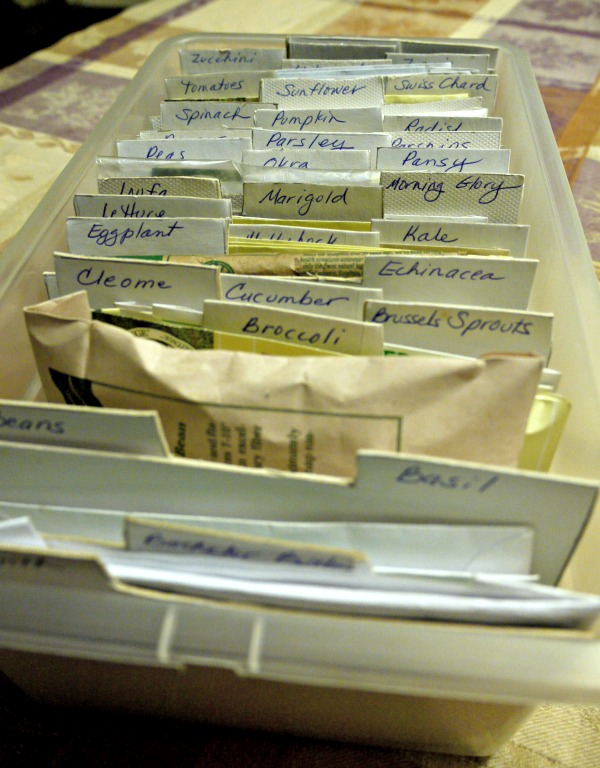 box used to organize seed packets