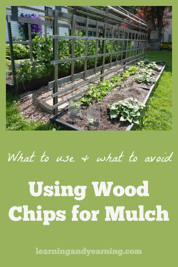 There's a lot of confusion about using wood chips for mulch. Here's some solid information about what to use and what to avoid. #woodchips #mulch #organicgardening