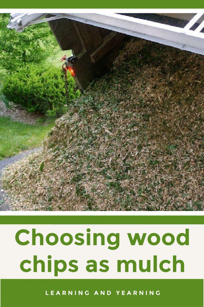 Choosing wood chips as mulch!