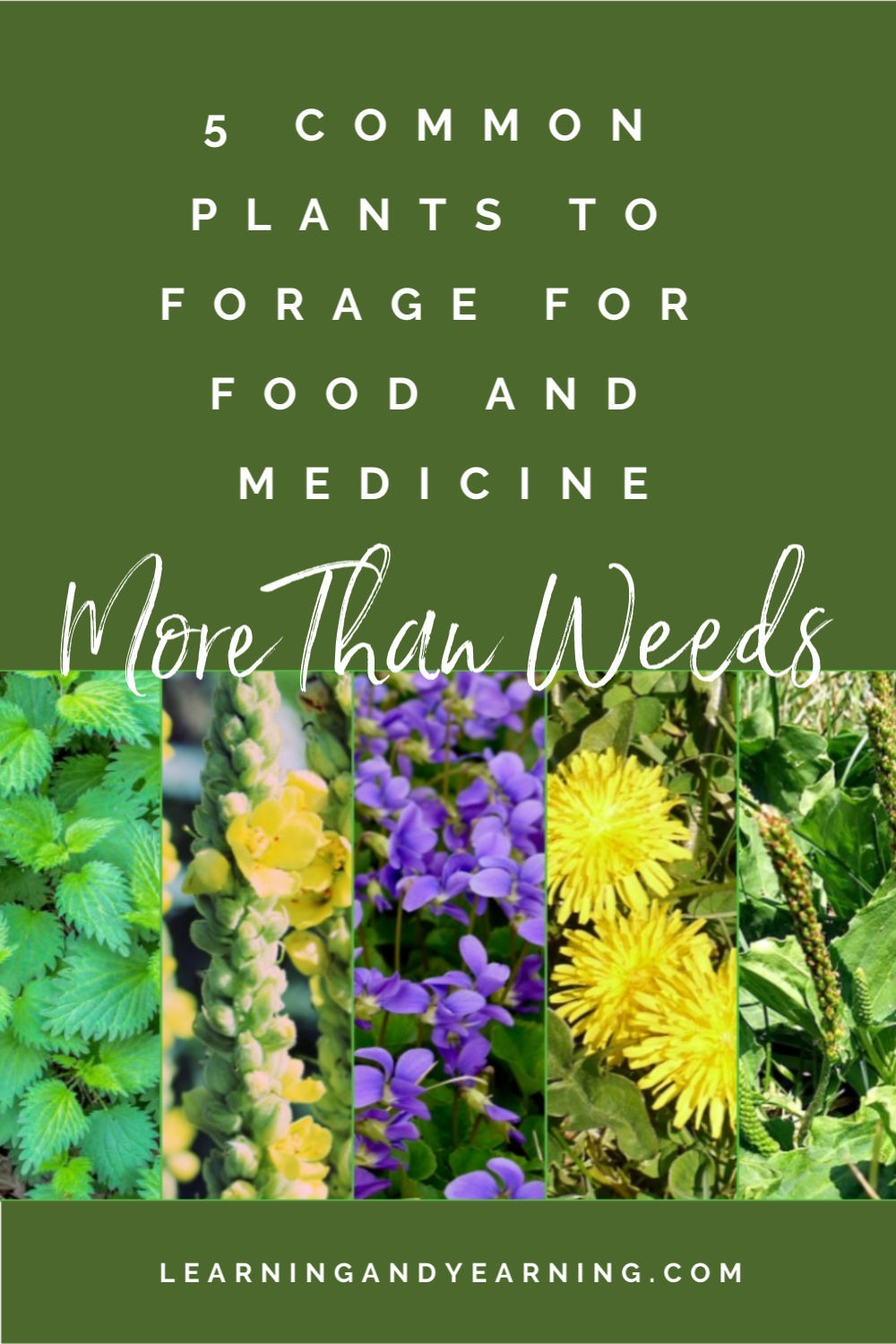 These 5 plants are more than weeds, they are food and medicine!