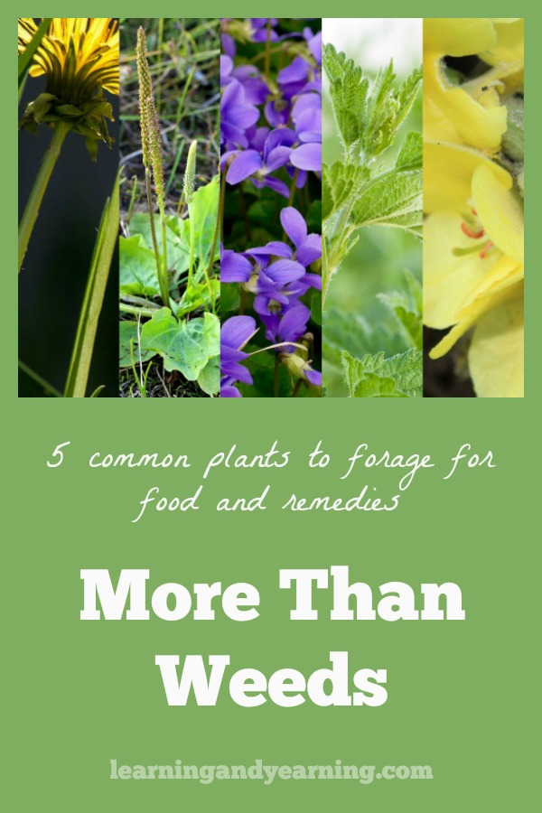 Are you interesting in foraging for food or home remedies, but have been a bit hesitant to go forward because you lack the confidence? I'm here to help!