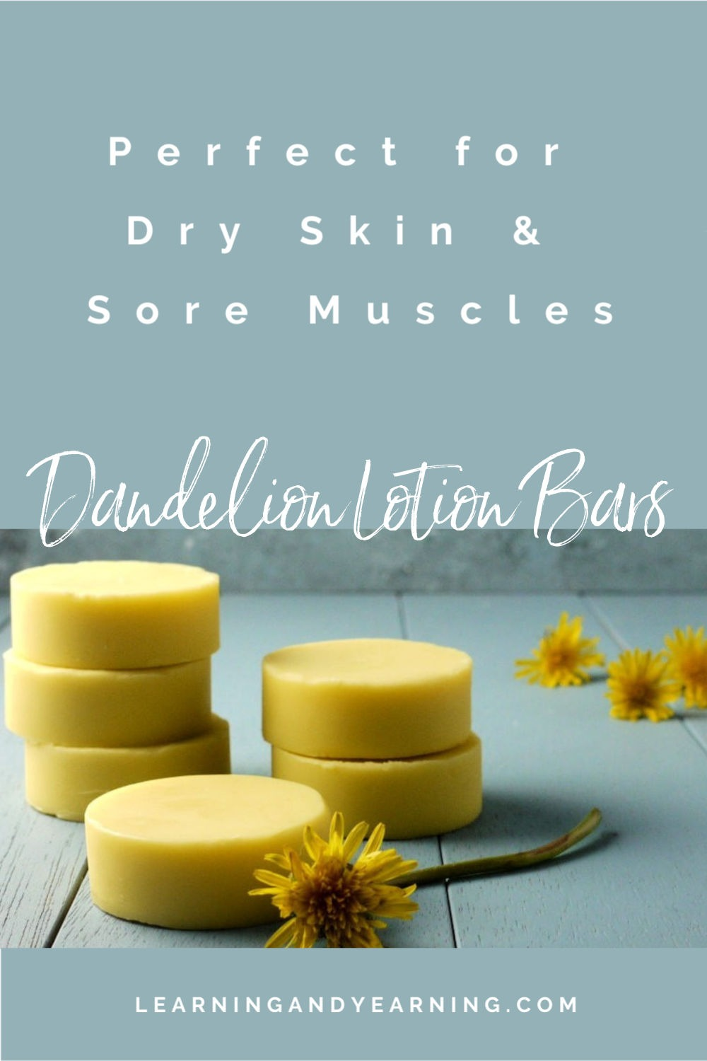 Dandelion Oil Lotion Bars