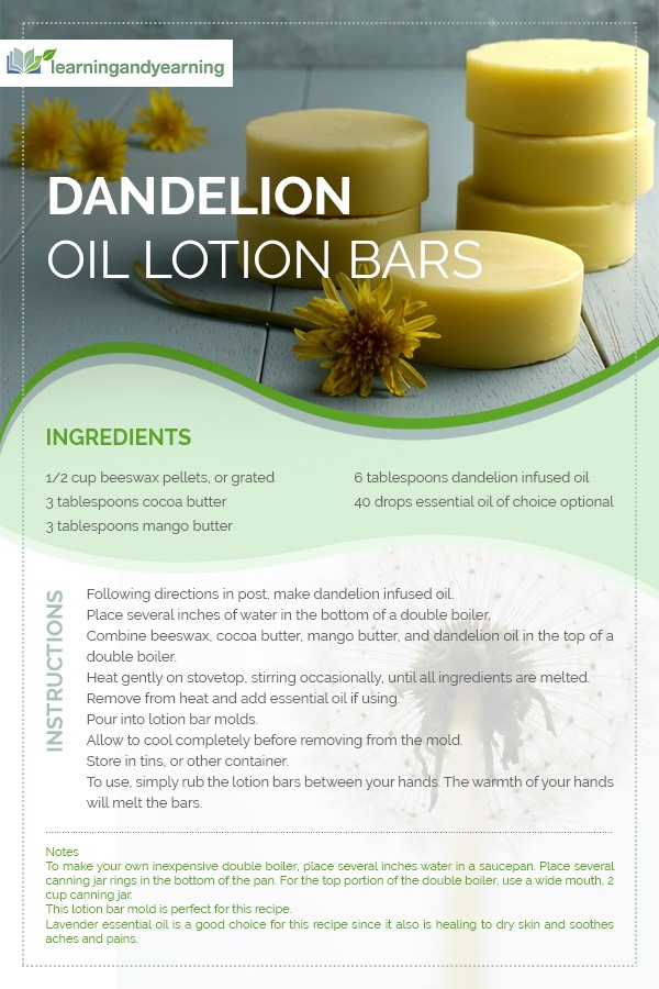 An easy way to get the benefits of dandelion for your skin is to infuse the flowers into oil. And then use that oil to make dandelion oil lotion bars! #dandelion #lotionbars
