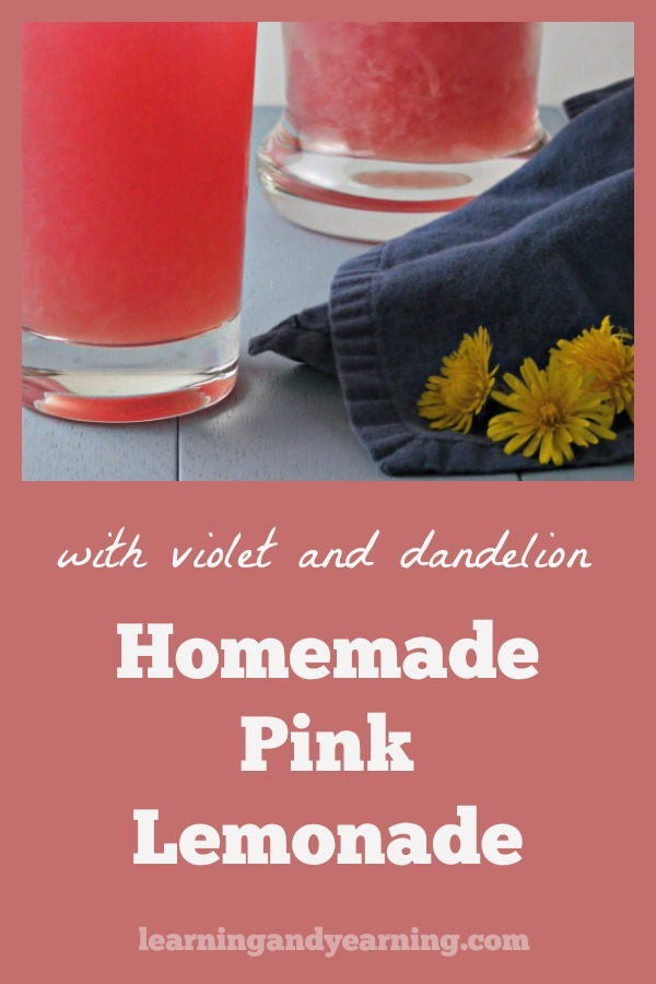 Spring with all its lovely flowers is the perfect time to harvest and use edible flowers. There are so many from which to choose - forsythia, lilac, redbud, and of course violet and dandelion. And that makes spring the perfect time to make homemade violet and dandelion pink lemonade. #violets #dandelion #lemonade
