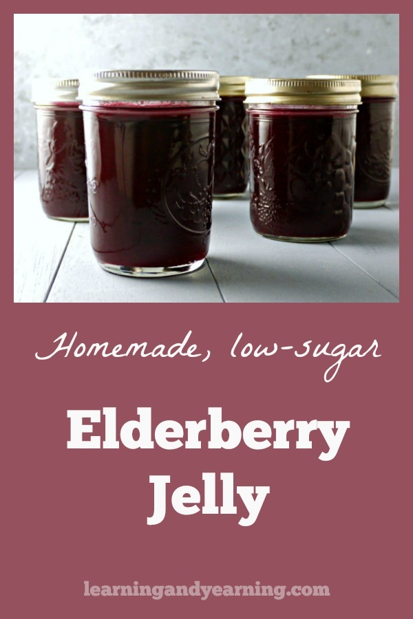Elderberry is a popular late-summer berry we love to forage. It makes a wonderful, low sugar elderberry jelly full of all the benefits of elderberries!