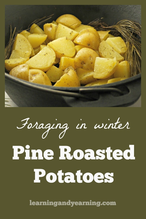Roasted on a bed of pine needles, the smokey aroma of these oven roasted potatoes will have your guests drooling before they even get to the table! #pine #foraging #foraginginwinter