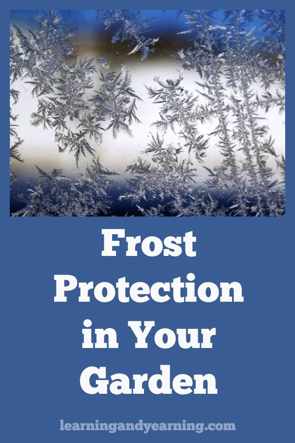 In the spring and fall, in northern climates, frost can be a concern. Frost protection for plants in your vegetable garden doesn't have to be complicated, though. Being prepared is what's important, since frosts can be unpredictable and can come on quickly. #frost #gardening #organicgardening