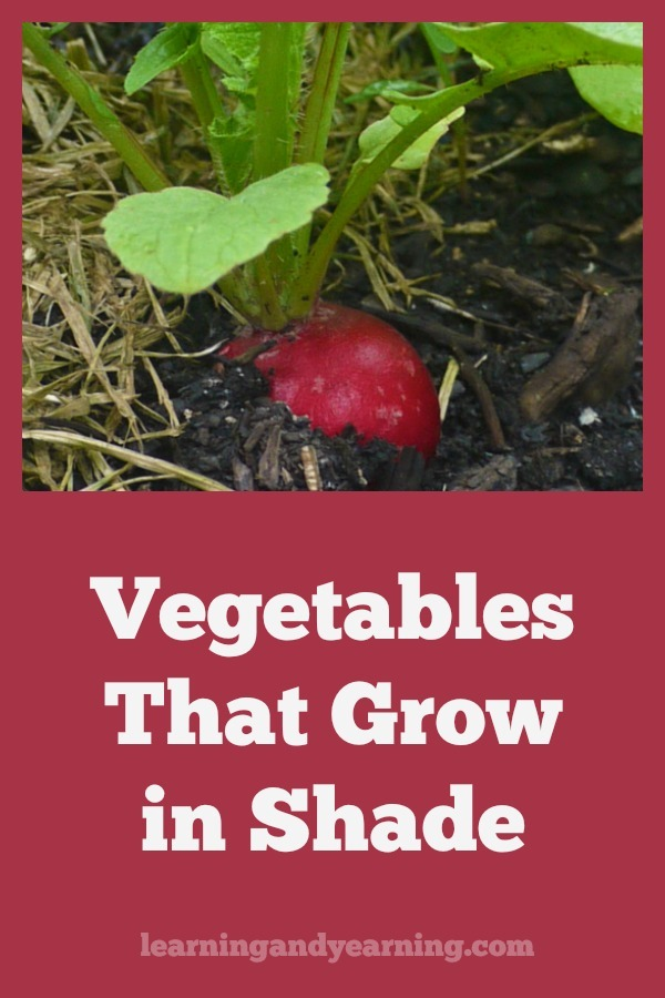 Finding a sunny location for your garden can be a challenge, but don't give up, since there are a number of herbs and vegetables that you can grow in shade. #gardening #organicgardening