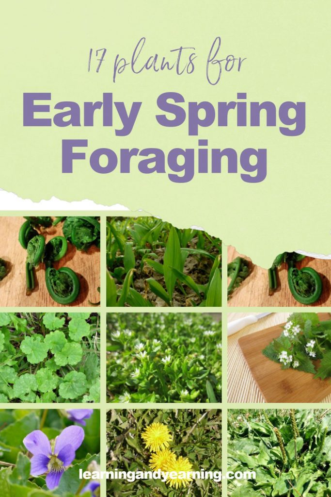Plants for early spring foraging!
