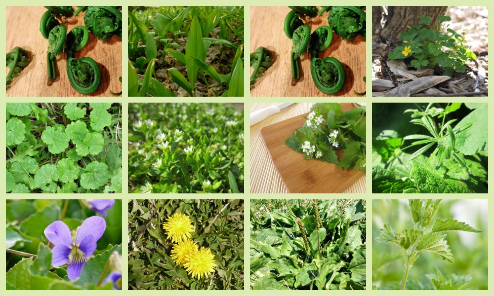 plants for spring foraging