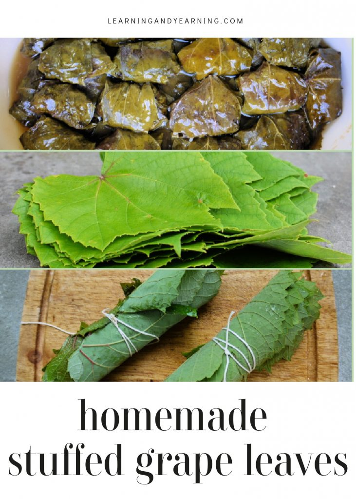 Enjoy a traditional recipe of homemade stuffed grape leaves using foraged or homegrown leaves!